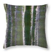 Sunlight Through Cacti Throw Pillow