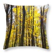 Sunburst Through Trees Throw Pillow