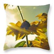 Sunlit Daisies Throw Pillow