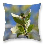 Sunlit Dogwood Blossoms Throw Pillow