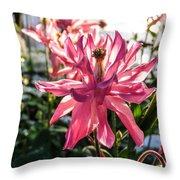 Sunlit Fancy Pink Columbine Throw Pillow