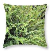 Sunlit Ferns Throw Pillow