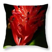 Sunlit Red Bromeliad 2 Throw Pillow