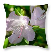 Sunlit Rhododendrons Throw Pillow