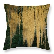 Sunlit Spanish Moss Throw Pillow