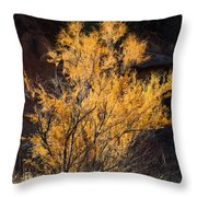 Sunlit Tree In Palo Duro Canyon 110213.06 Throw Pillow