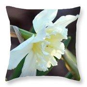 Sunlit White Daffodil Throw Pillow