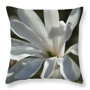 Sunlit White Magnolia Throw Pillow