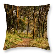 Sunlit Woods In Late Autumn Throw Pillow