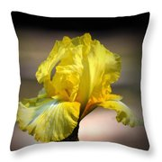 Sunlit Yellow Iris Throw Pillow