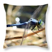 Sunning Blue Dragonfly Square Throw Pillow