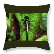 Sunning Dragon Throw Pillow