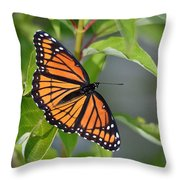 Sunning Royalty II Throw Pillow
