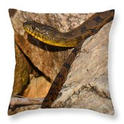 Sunning Snake Throw Pillow