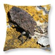 Sunning Stinkbug Throw Pillow