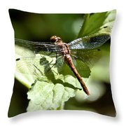 Sunny Dragonfly Throw Pillow