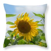 Sunny July 2013 Throw Pillow