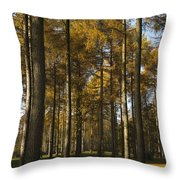 Sunny Larch Grove Throw Pillow