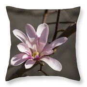 Sunny Pink Magnolia Blossom Throw Pillow