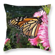 Sunny Side Monarch Throw Pillow
