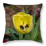 Sunny Yellow Tulips Series  Picture D Throw Pillow
