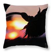 Sunset 365 19 Throw Pillow