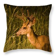 Sunset Buck Throw Pillow