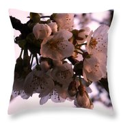 Sunset Cherry Blossoms Throw Pillow by Christine Burdine