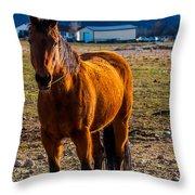 Sunset Bay Horse Heber Valley Utah Throw Pillow