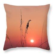 Sunset In Tall Grass Throw Pillow