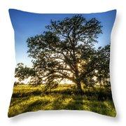 Sunset Oak Throw Pillow