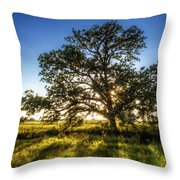 Sunset Oak Throw Pillow