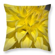 Sunshine Dahlia Throw Pillow
