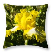 Sunshine Iris Throw Pillow