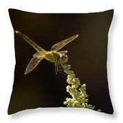 Sunshine On A Landed Dragonfly. Throw Pillow