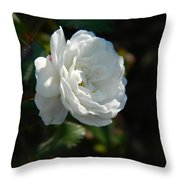 Sunshine White Rose Throw Pillow
