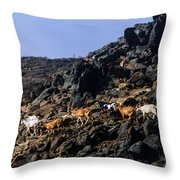 Sure Footed Throw Pillow