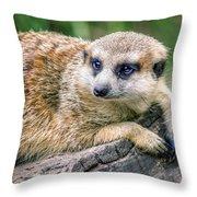 Suricata Suricatta Throw Pillow