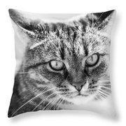 Surprised Cat Throw Pillow