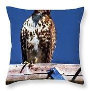 Swainson Hawk Throw Pillow