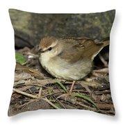 Swainsons Warbler Throw Pillow