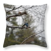 Swallow Discussion Throw Pillow