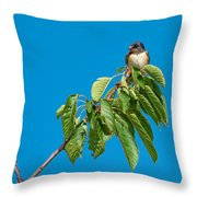 Swallow Sitting On Cherry Tree Branch Throw Pillow