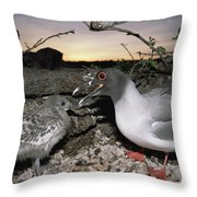 Swallow-tailed Gull And Chick In Pebble Throw Pillow by Tui De Roy