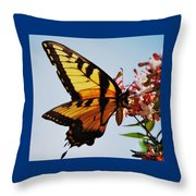 Swallowback Butterfly # 2 Throw Pillow