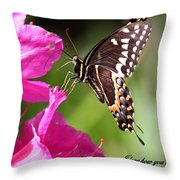 Swallowtail And Azalea - Love Throw Pillow