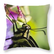 Swallowtail Butterfly Throw Pillow by Priya Ghose