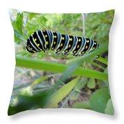 Swallowtail Caterpillar Throw Pillow