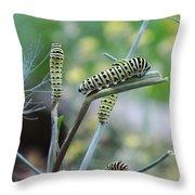 Swallowtail Caterpillars On Dillweed Throw Pillow