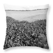 Swamp Hyacinths Water Lillies Black And White Throw Pillow